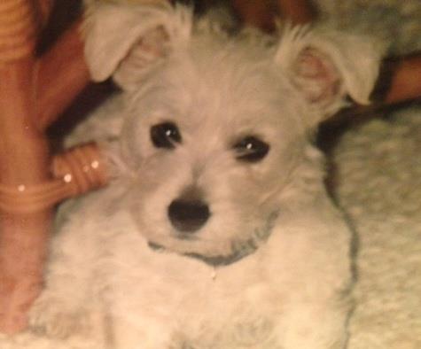 Baby Gidget
