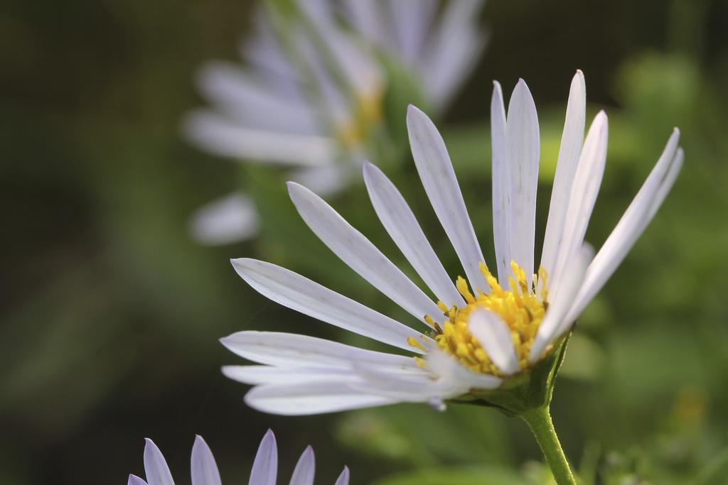 hopeflowerlarge