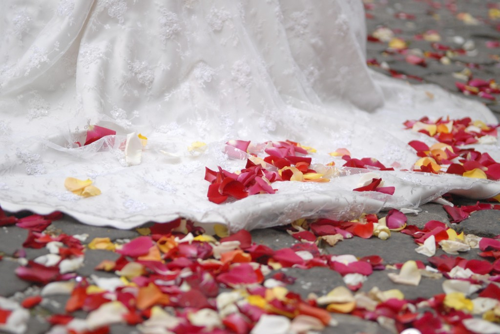 rose petals on ground