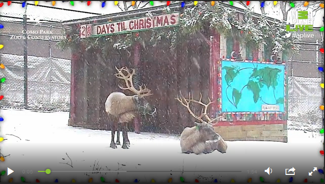 Reindeer Cam 2015