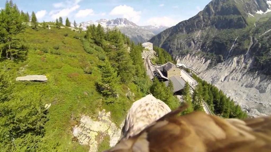 You can fly like an eagle