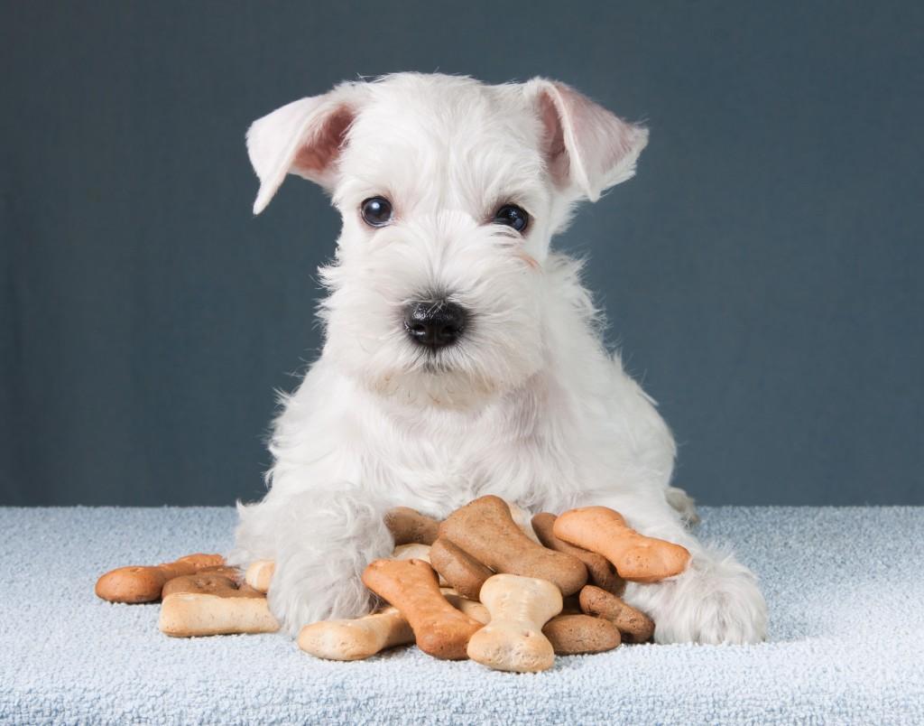puppy with dog biscuits bones