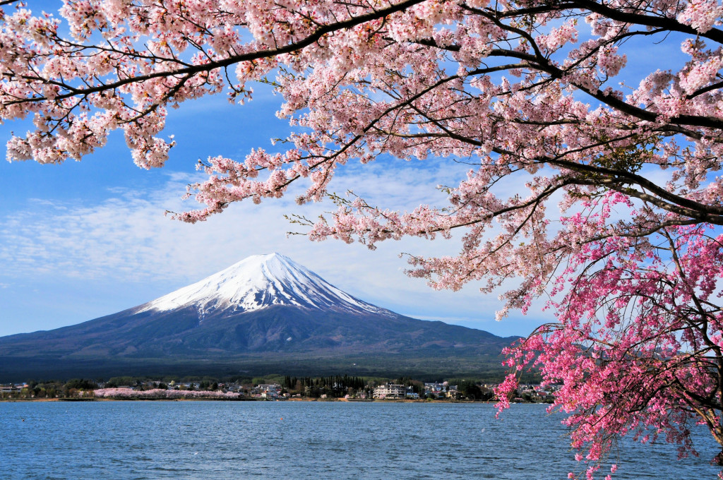 Mount Fuji and Cherry tree