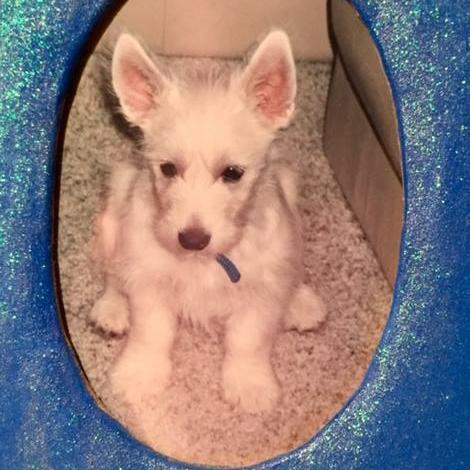 White dog in blue frame