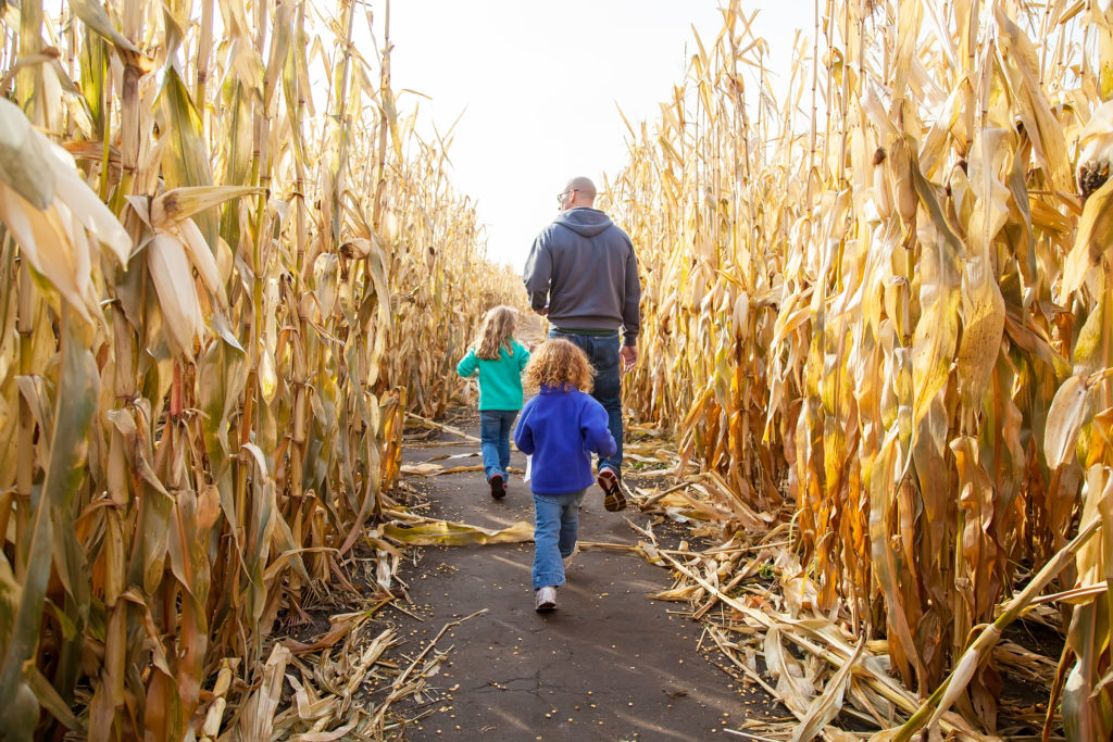 Father & Daughters In Corn Maze