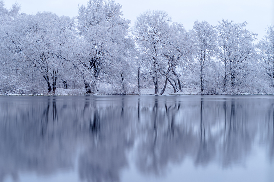An ice covered lake with white trees in the background