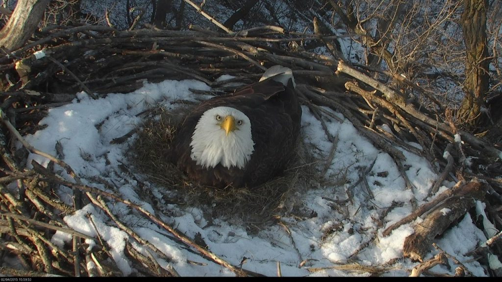 Need a reminder that spring is just around the corner?  The DNR Eagle Cam is back!