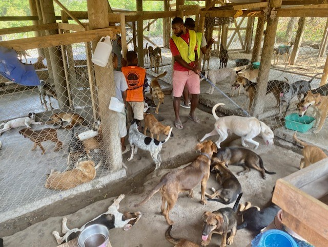 Picture of Roatan Rescue kennels