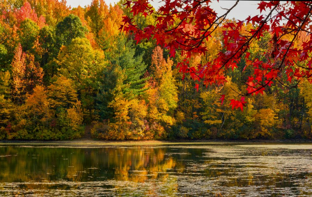 Bright fall leaves over a lake
